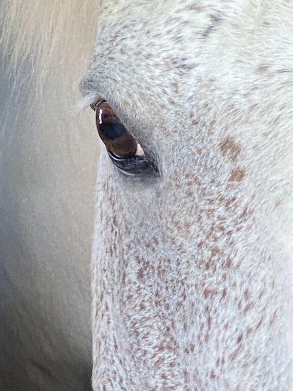Horses gaze at a farm in Maryland thumbnail