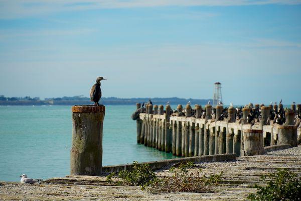 Cormorant Pier thumbnail