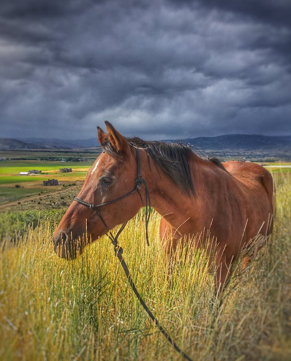 Portrait of an Old Mare Grazing Before a Storm thumbnail