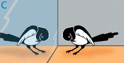 Birds can recognize themselves in a mirror