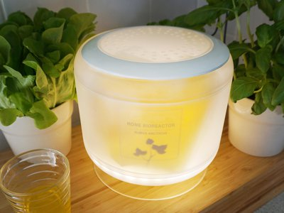 The home bioreactor in its intended environment. It also provides light for herbs.