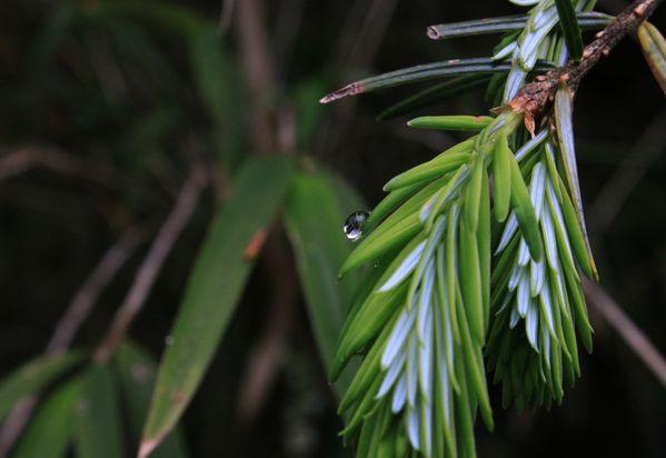Raindrops thumbnail