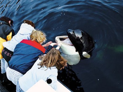 Luna sought the company of humans on Nootka Sound.