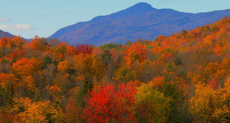 Ecologists warn that New England's maples could be at risk