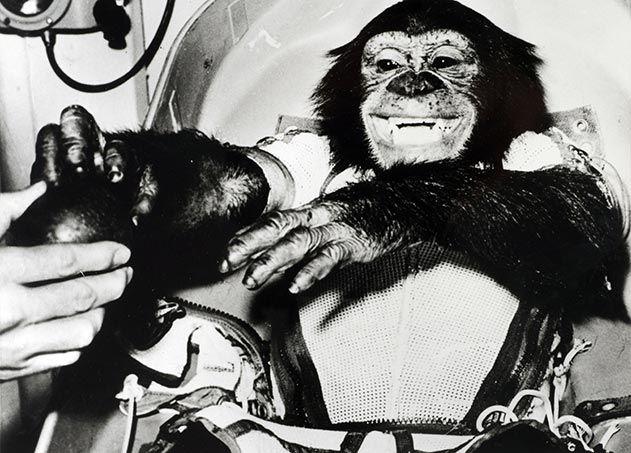 Ham the Chimpanzee
