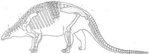 20110520083115800px-nodosaurus_textilis.jpg