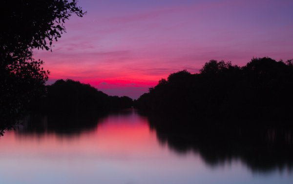 Twilight moments at mangrove forest thumbnail