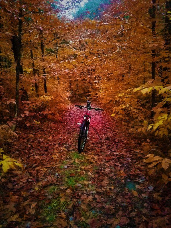 Fall Commute thumbnail