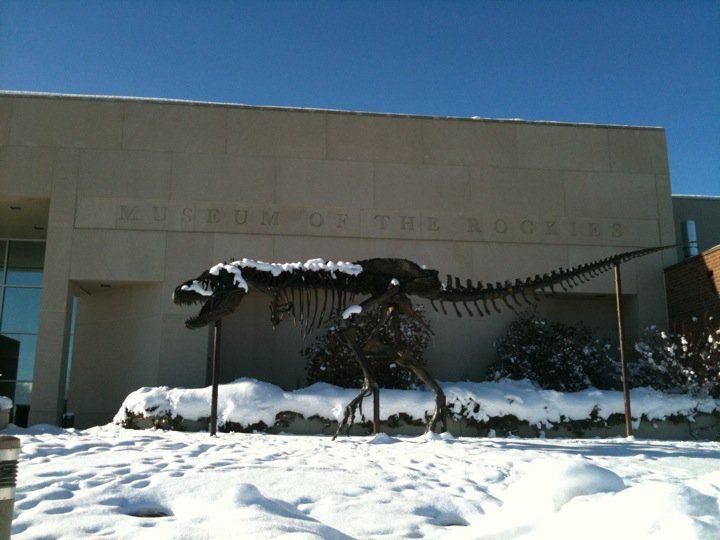 20110520083251tyrannosaurus-in-snow.jpg