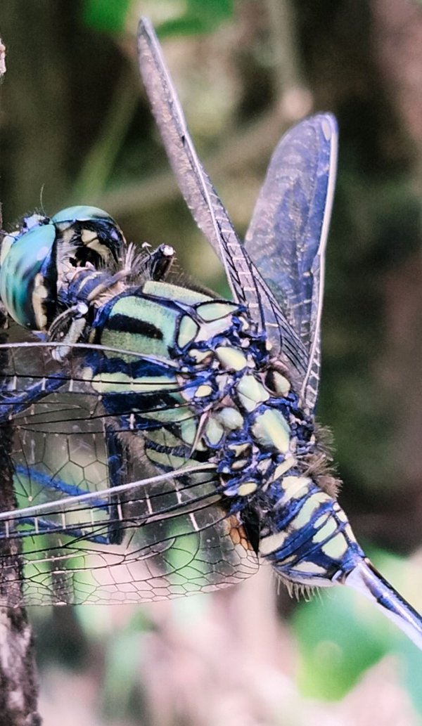 A dragonfly's complexity thumbnail