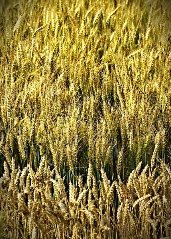 Crops thumbnail