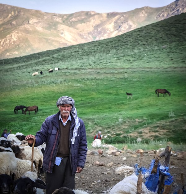 Old Kurdish Shepherd thumbnail