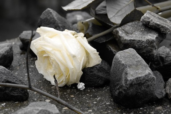 Solitary Rose at Platform 17 Holocaust Memorial in Berlin thumbnail