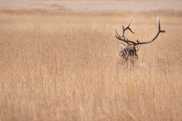 Lonely Elk thumbnail