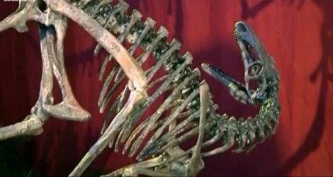 20120703031017new-dinosaur-thumb.jpg