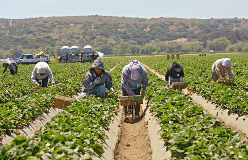The Toxic Rise of the California Strawberry