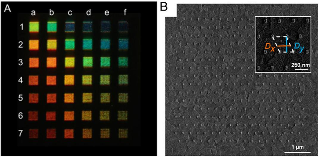 Research Into How Squid Camouflage Leads to An Ultra-Sharp Display for Televisions and Smartphones