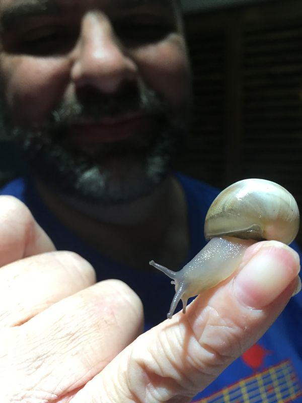 Snail on my Husband's Finger in Austin, Tx thumbnail