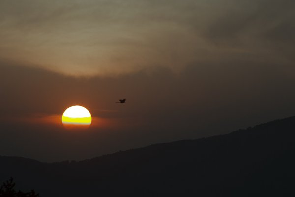Bird flying at sunset thumbnail