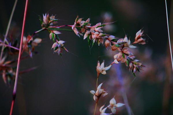 Wild plant or wheat plant stock photo thumbnail