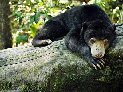 Around 20 percent of the time, the bears returned a playmate's expression within one second of seeing it