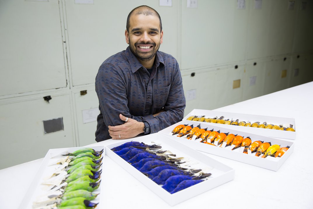 A person with trays of colorful taxidermied birds.