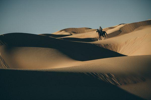 Arabian Horse in Liwa Desert thumbnail
