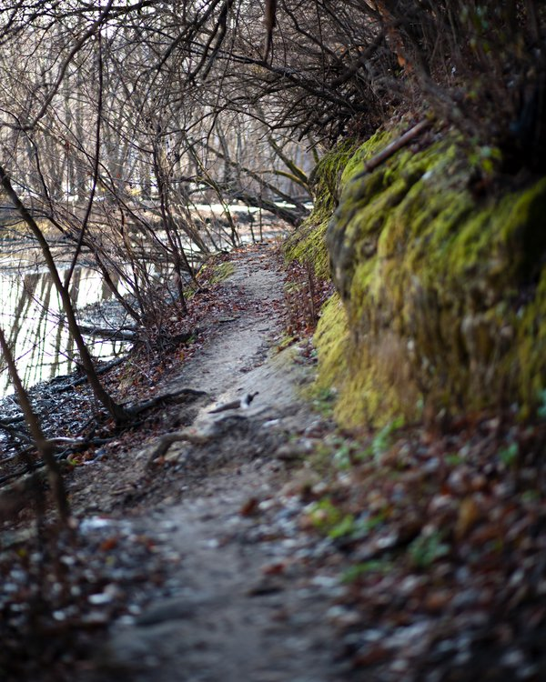 November 28th, 2016 Nature-made path on an inlet off of the Mississippi River. thumbnail