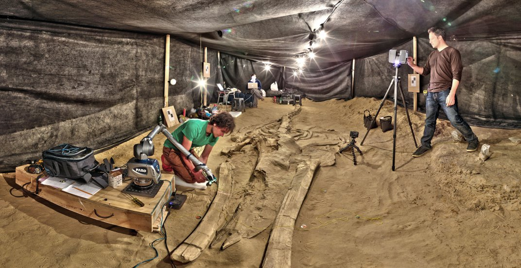 Scientists Solve the Mystery of a Nine-Million-Year-Old Mass Whale Die-Off