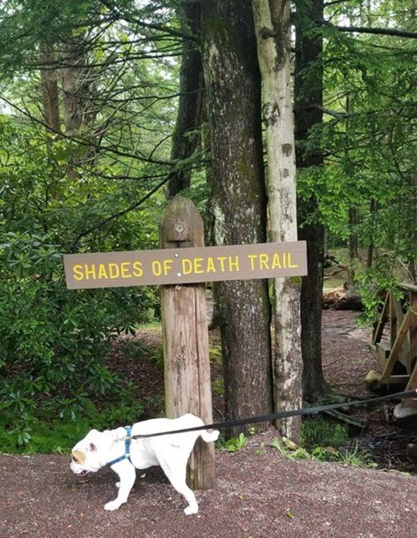 Shades of Death thumbnail