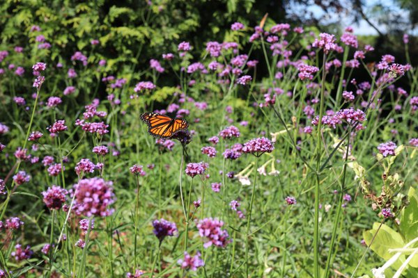 Butterfly in the Arboretum thumbnail