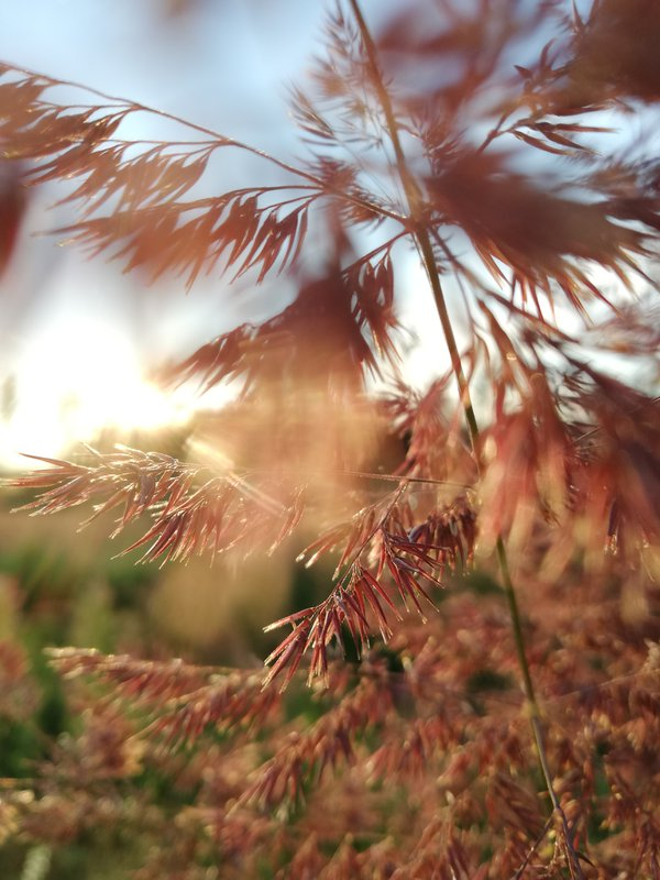 the feeling of an autumn evening thumbnail