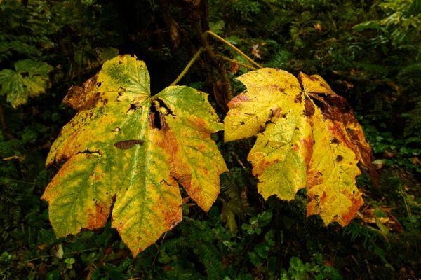 Rainforest  thumbnail