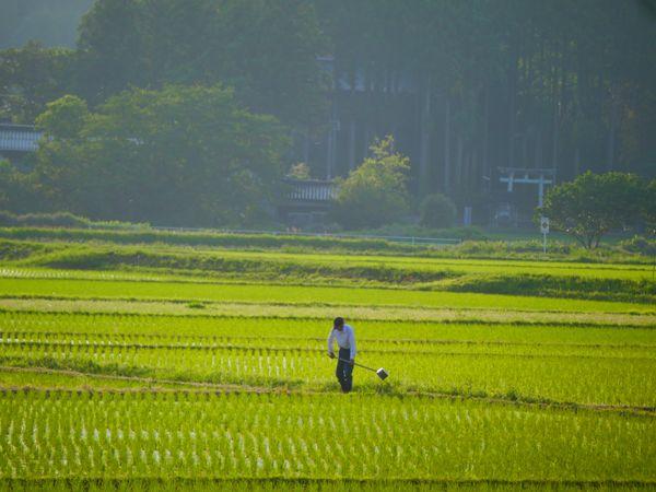 Spring Water Rice Field in Satoyama on Phantom Isle thumbnail