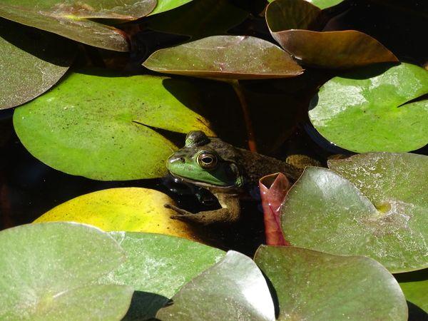 Where's froggy? thumbnail