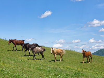 The modern horse overtook other equine lineages as it spread across Europe and Asia thousands of years ago.