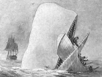An illustration of Moby Dick attacking a whaling ship.