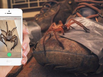 Critterpedia allows users to identify Australian spider and snake species with the snap of a photo.