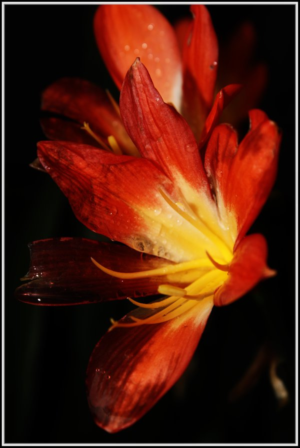 Beautiful flower petals after rain thumbnail