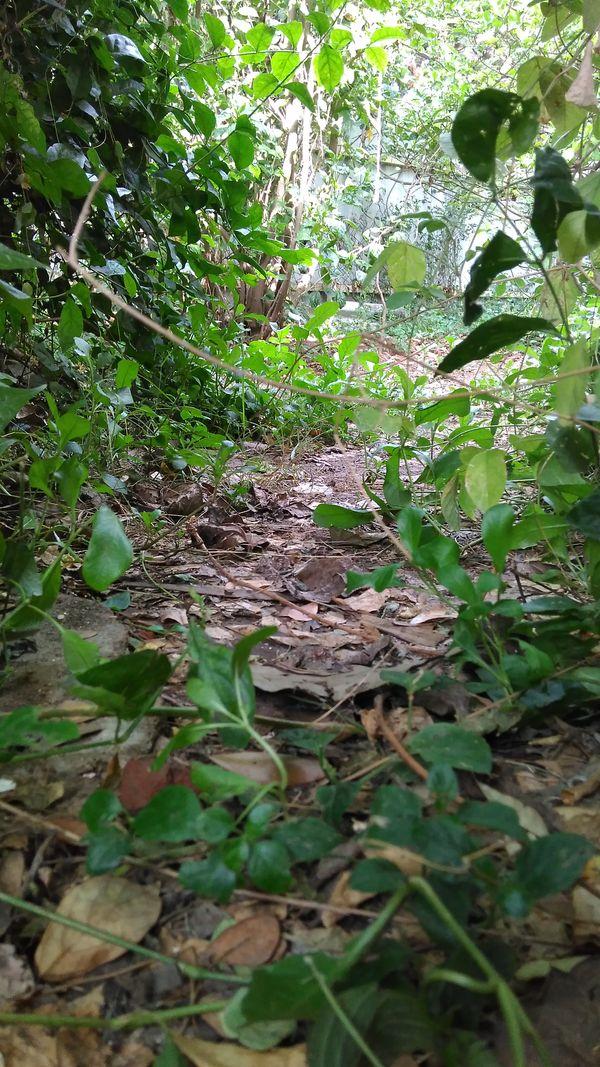 The Path of a Garden thumbnail
