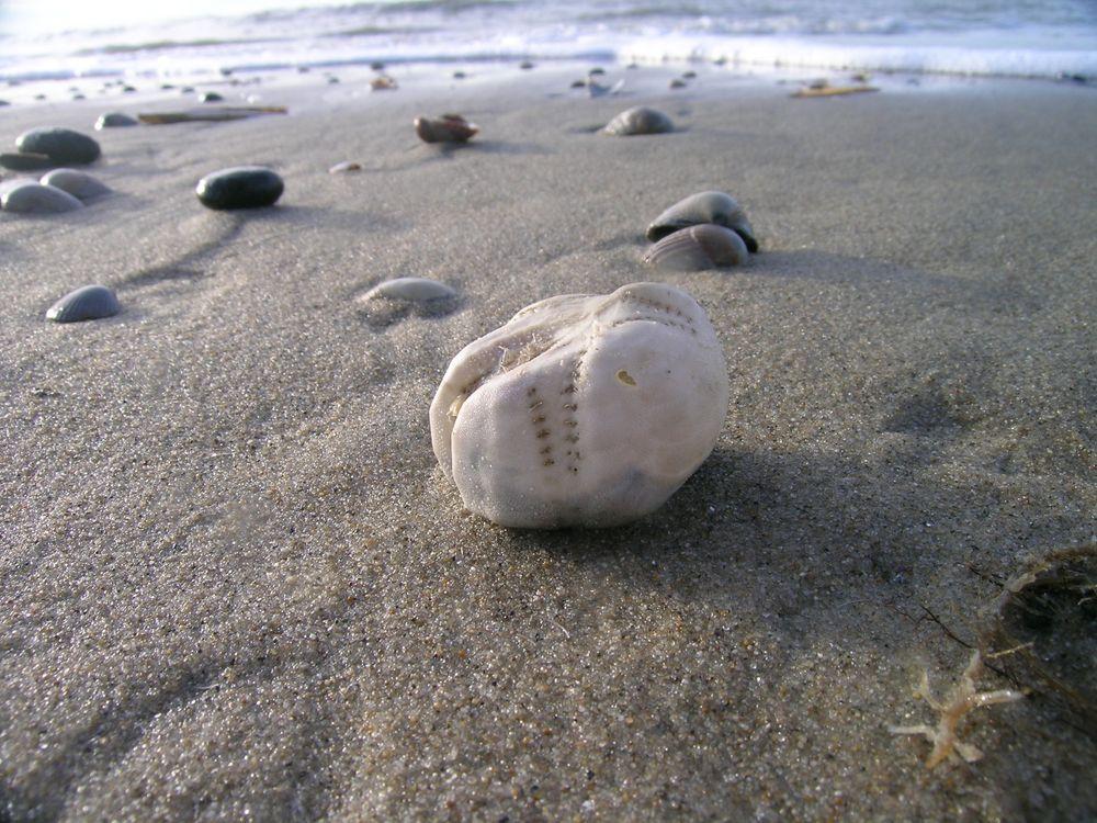 Ecomare_-_zeeklit_(5019-strand-zeeklit-ogb).jpg