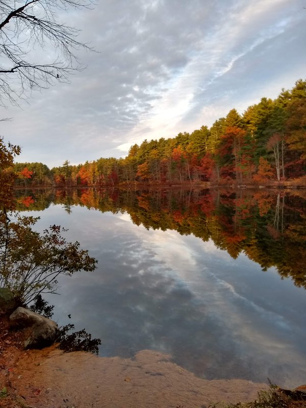 Fall Foliage on the Pond thumbnail