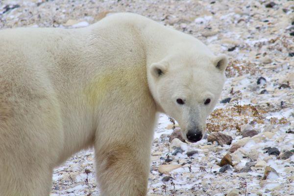 Polar gaze thumbnail