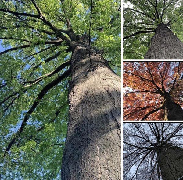 Seasons by a tree thumbnail