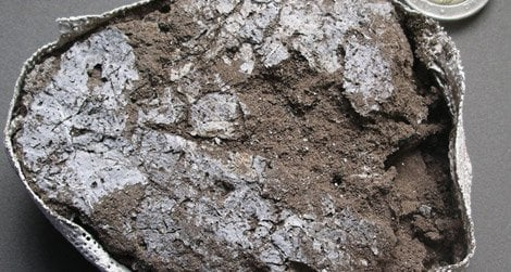 Fossil leaves from the 77,000-year-old mattress
