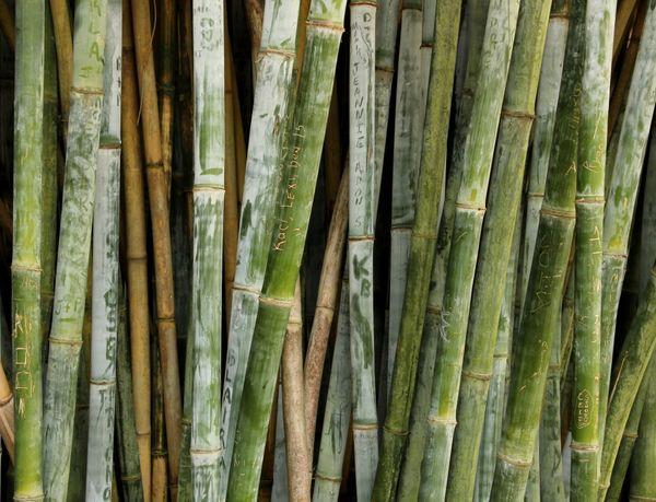 Bamboo Graffiti thumbnail