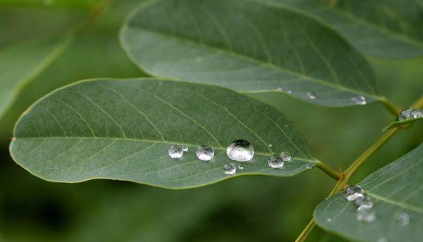 Drops on leaf thumbnail
