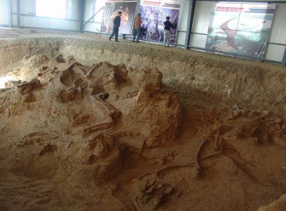 'Amazing Dragon' Fossils Unearthed in China Rewrite Story of Long-Necked Dinosaurs