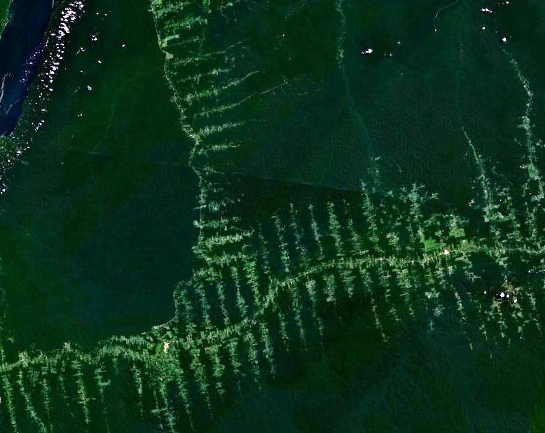 amazonie_deforestation.jpg