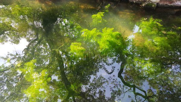 Aquatic Forest - Guyi Garden- Shanghai thumbnail